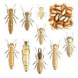 3d render of termite set Royalty Free Stock Photo