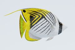 3D Render of Threadfin Buterflyfish Royalty Free Stock Photo
