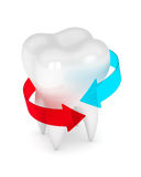 3d render of tooth with arrows Stock Photos