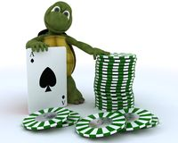 Tortoise with casino cards and chips Stock Images