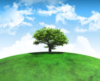 3D render of a tree on a curved grassy landscape Royalty Free Stock Image