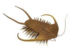 3d render of trilobite Stock Image