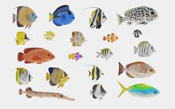3D Render of Tropical Fish Collection Stock Images