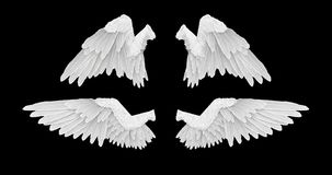 3D render White angel wings with on an black background. 4K Stock Photo