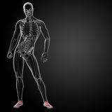 3d render x-ray of foot Royalty Free Stock Photography