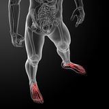3d render x-ray of foot Royalty Free Stock Images