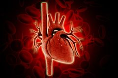 3d rendered human heart isolated on color background stock illustration
