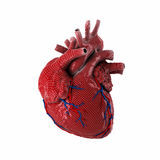 3d rendered human heart. royalty free stock photo