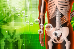 3d rendered illustration - backache Stock Photography