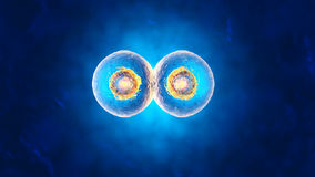 3D rendered illustration of Cell Replication Royalty Free Stock Photo