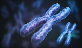3D rendered illustration of chromosomes. Genetics concept.  Royalty Free Stock Photo