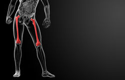 3d rendered illustration - femur bone Stock Photos