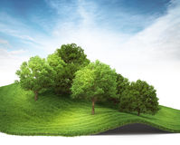 3d rendered illustration of an hill with grove. Stock Photography