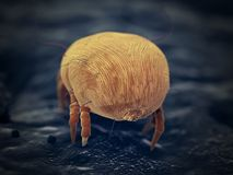 A house dust mite. 3d rendered illustration of a house dust mite royalty free illustration