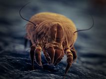 A house dust mite royalty free stock photo