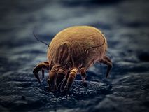 A house dust mite. 3d rendered illustration of a house dust mite vector illustration