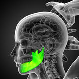 3d rendered illustration of a jaw bone Royalty Free Stock Images