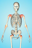 3d rendered illustration of a male skeleton Stock Image