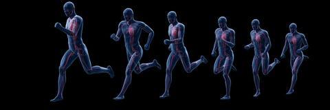 A running mans heart. 3d rendered illustration of a running mans heart stock illustration