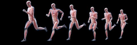 A running mans muscles stock illustration