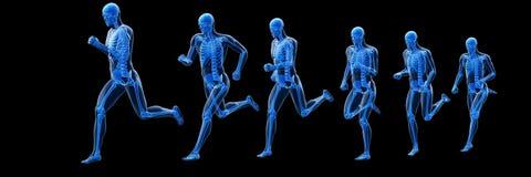 A running mans skeleton. 3d rendered illustration of a running mans skeleton vector illustration