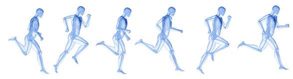 A running mans skeleton royalty free illustration