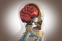 Human anatomy - structure of head brain, eyes etc Royalty Free Stock Photos