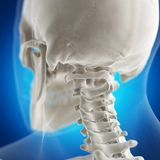 The atlas bone. 3d rendered medically accurate illustration of the atlas bone royalty free illustration