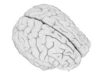 The brain anatomy. 3d rendered medically accurate illustration of the brain anatomy stock illustration