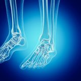 The foot bones. 3d rendered medically accurate illustration of the foot bones stock illustration