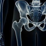The hip joint. 3d rendered medically accurate illustration of the hip joint vector illustration