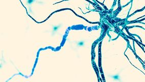 A human nerve cell stock illustration