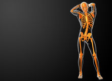 3d rendered orang skeleton Royalty Free Stock Image