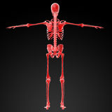 3d rendered red skeleton Stock Image
