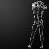 3d rendered skeleton Stock Photo