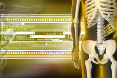 3d rendered Skeleton Royalty Free Stock Photo