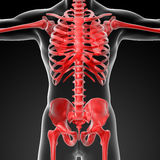 3d rendered skeleton Stock Photography