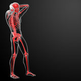 3d rendered skeleton Royalty Free Stock Photography