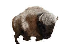 3D Rendering American Bison on White Royalty Free Stock Photo