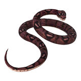 3D Rendering  Anaconda Snake on White Royalty Free Stock Images