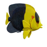3D Rendering Angelfish on White Royalty Free Stock Image