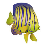 3D Rendering Angelfish on White Royalty Free Stock Photos