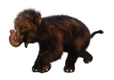3D Rendering Baby Woolly Mammoth on White. 3D rendering of a baby woolly mammoth isolated on white background Royalty Free Stock Images