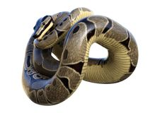 3D Rendering Ball Python on White Royalty Free Stock Image