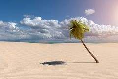 3D rendering from a beach scenery with a palm tree and an ocean Royalty Free Stock Photos