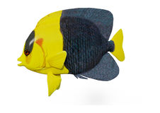 3D Rendering Bicolor Angelfish on White Royalty Free Stock Photos