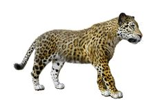 3D Rendering Big Cat Jaguar on White vector illustration