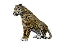 3D Rendering Big Cat Jaguar on White royalty free illustration