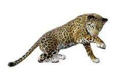 3D Rendering Big Cat Jaguar on White stock illustration