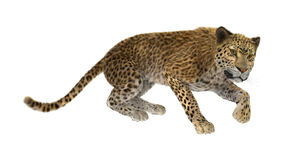 3D Rendering Big Cat Leopard on White Royalty Free Stock Photos